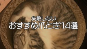 【2021年最新版】猫用の爪とぎ おすすめ14選|失敗なしで猫が喜ぶ人気の商品が必ず見つかる!