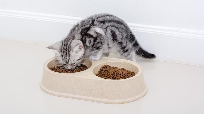 猫に食べさせても問題ない食べ物