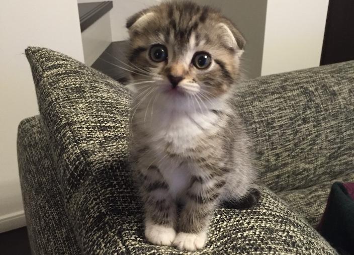 それでも猫を飼う決心をしたあなたへ!