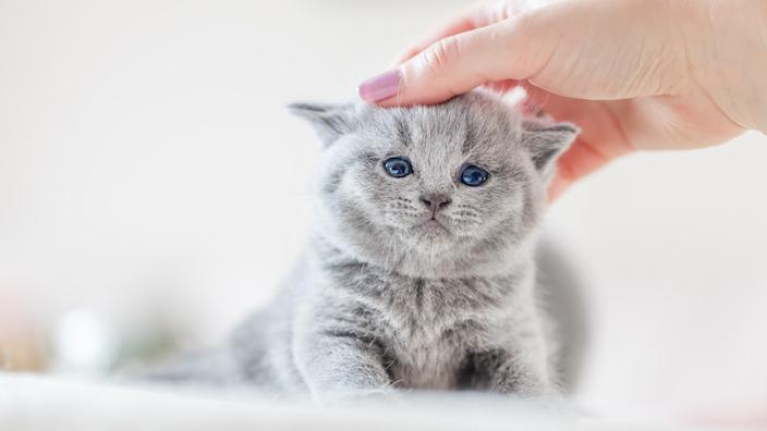 子猫が上手に排泄できたら褒める|失敗しても叱らない