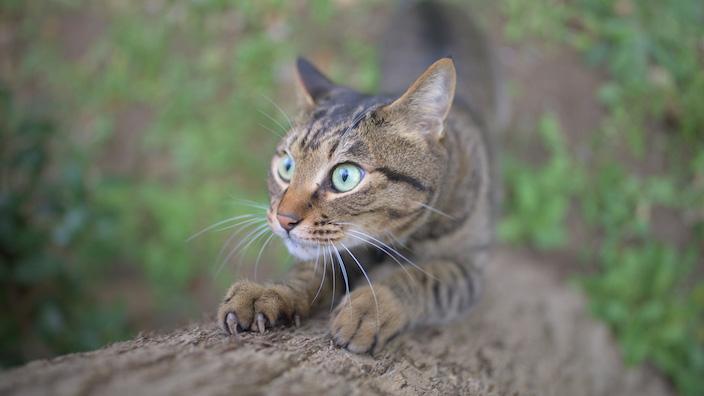 子猫の爪とぎトレーニングまとめ