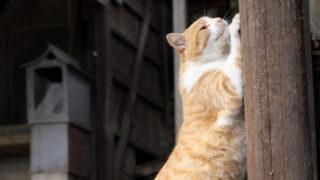 猫の爪とぎ対策を場所ごとに徹底解説|ソファー・カーペット・柱・壁などの具体的な対策がわかる!
