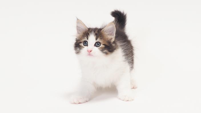 子猫がトイレで排泄してくれない時の対処方法