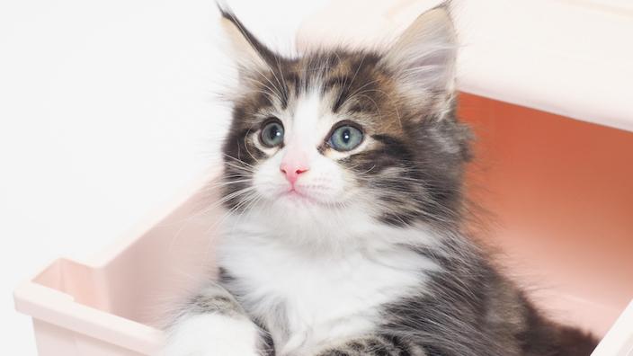 子猫のトイレトレーニング(しつけ)まとめ