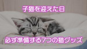 【初心者必読】子猫を迎える時に必ず準備すべき7個の猫グッズ|初心者向けのおすすめグッズも紹介