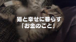 【お金のこと】猫を飼うために必要な費用は年間8万円!?|食費・消耗品・ワクチン・病院・避妊・去勢・保険代をまとめてみた