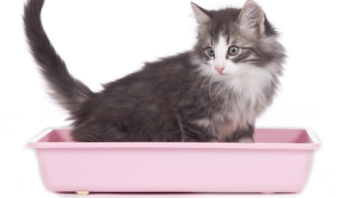 子猫用のトイレ