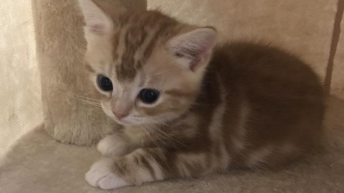 子猫を飼い始めた初日の正しい過ごし方のまとめ