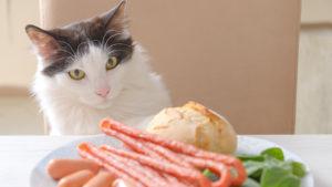【実は魚も?】猫に食べさせてはいけない危険な食べ物13選|人間の食べ物はあげちゃだめ!
