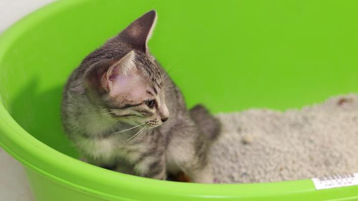 これで失敗しない!子猫のトイレトレーニングのやり方|いつから覚えさせる? 置き場所は? 設置個数は?