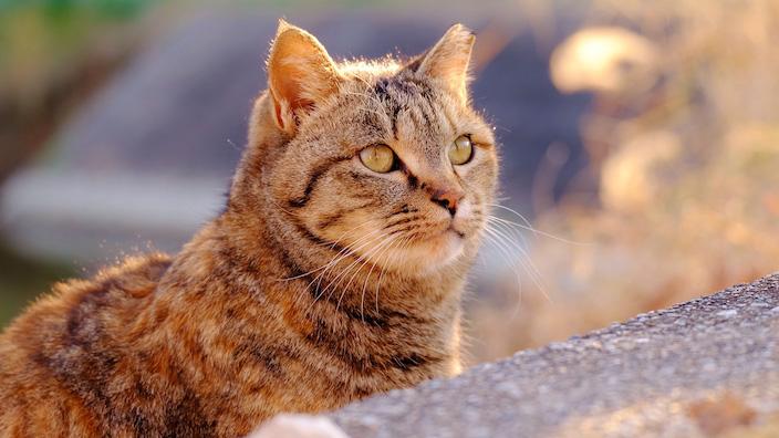 のら猫をひろう場合のメリット・デメリット
