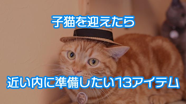 【厳選13品】子猫を迎え入れたら近いうちに準備するもの|おすすめ猫グッズと選び方を紹介!