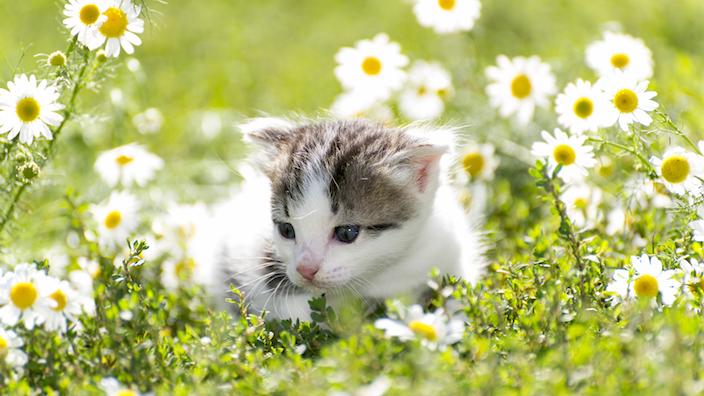 子猫を迎える時に必ず準備すべき7個の猫グッズまとめ