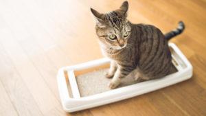 【根気強くしつけ】子猫の爪とぎトレーニングのやり方|またたびは有効? ソファーでの爪とぎを防止する...