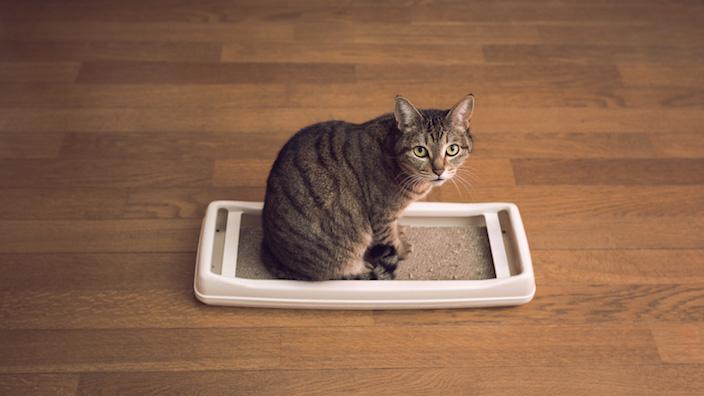 猫の爪とぎ対策まとめ