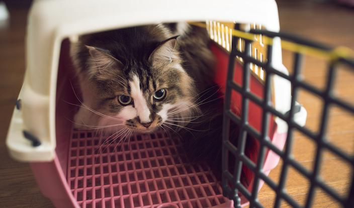 子猫用のキャリーバッグ