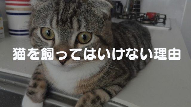 【猫を飼う前に読む!】猫を飼ってはいけない11の理由と注意点|それでもあなたは猫を飼いますか?
