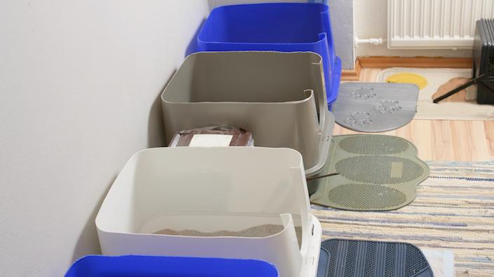 飼っている猫の数+1個のトイレを設置する