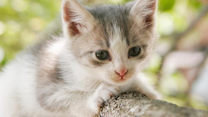 子猫の爪とぎトレーニングのやり方|いつから覚えさせる? 置き場所は? 設置個数は?