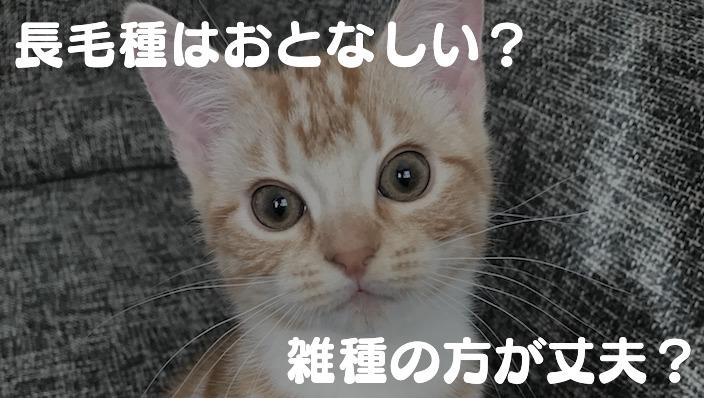 猫の特徴を徹底比較|オスとメス・子猫と成猫・短毛種と長毛種・純血種と雑種の違い