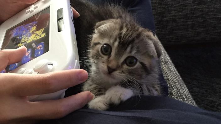 子猫と成猫の違いや特徴を知る