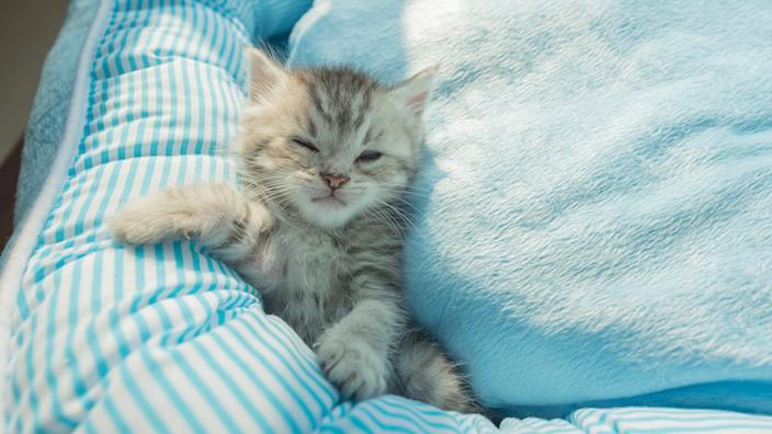 子猫用のベッド