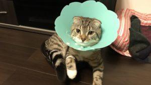 【チェックリストで簡単】子猫の健康診断のやり方を解説|猫を飼う前にしっかり確認!