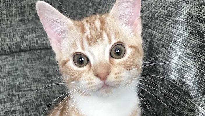 猫の性別による違いや特徴を知る