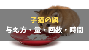 【永久保存版】子猫の餌の与え方・量・回数・時間を徹底解説!