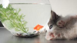 【水分は超重要】子猫の水の正しい飲ませ方|子猫が水を飲んでくれないときの対処方法を解説!
