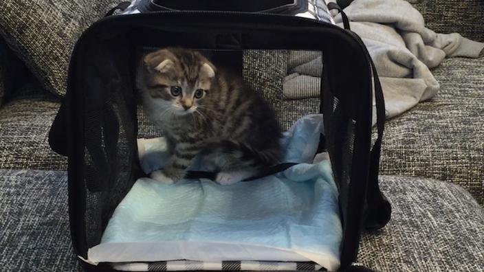 猫を飼い始めるときにかかる費用