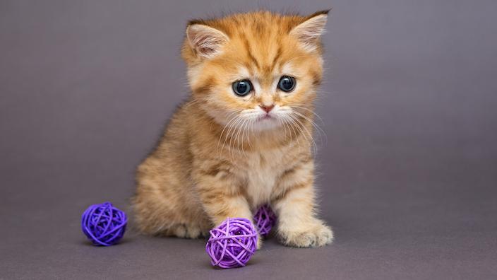 子猫を迎え入れたら近いうちに準備するものまとめ
