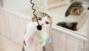 【初心者必読】子猫を迎える前にしておく部屋の準備|猫と快適に暮らす秘訣を解説!