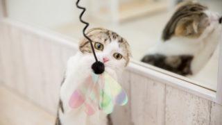 子猫を迎える前にしておく部屋の準備|猫と快適に暮らす秘訣を解説!