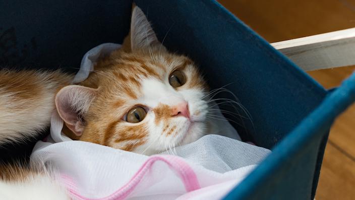 猫を入れる洗濯ネット