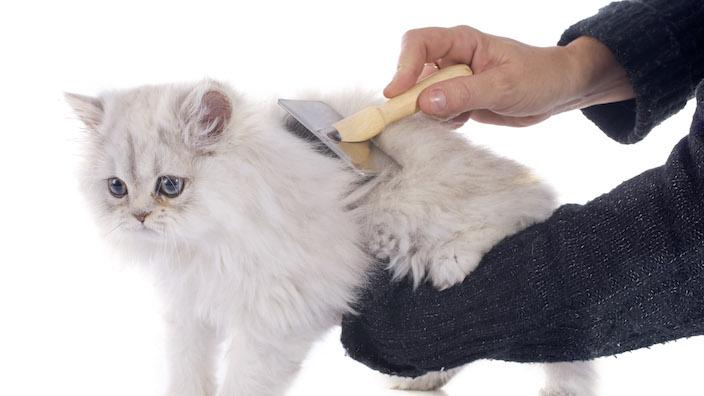 猫のグルーミング用品