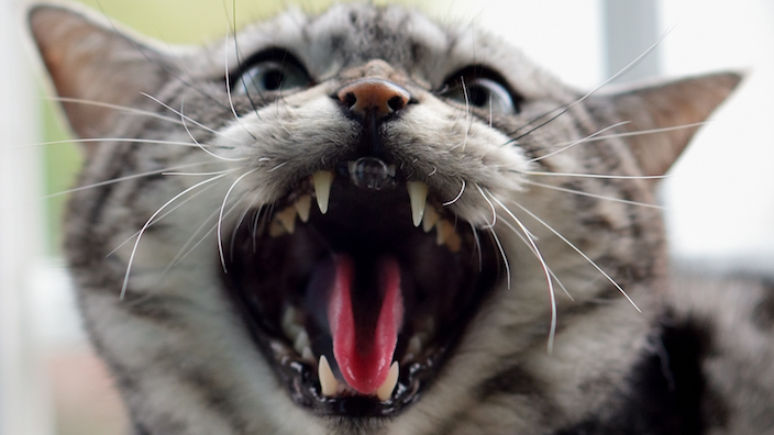 猫に食べさせてはいけない危険な食べ物13選|人間の食べ物はあげちゃだめ!