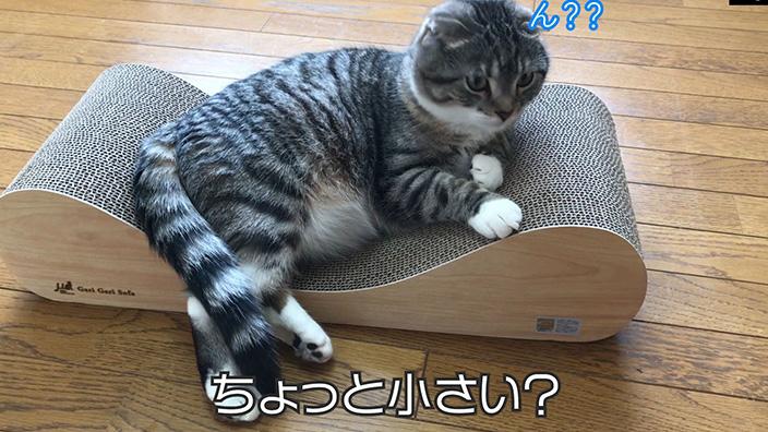 ▼大きめサイズの猫が寝れない!