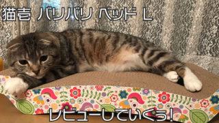 【猫壱 バリバリ ベッド L 花柄】両面使えてコスパ良し◎猫がダメになるベットは嘘じゃない!【口コミ・感想・評価】