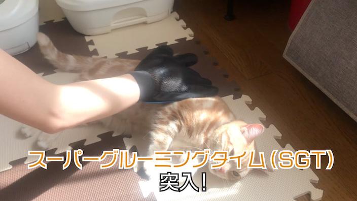 グルーミング嫌いな猫でも受け入れてくれやすい