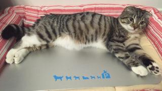 猫にとって最適な室温とは?