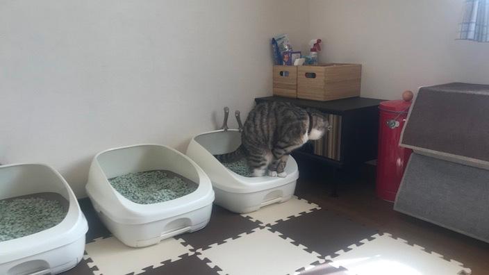 猫のスプレー行為まとめ