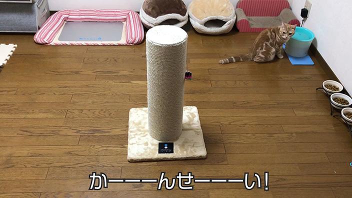 ottostyle.jp 猫用爪とぎポール(極太)|ねこぞーのレビュー・評価・口コミ・おすすめポイント