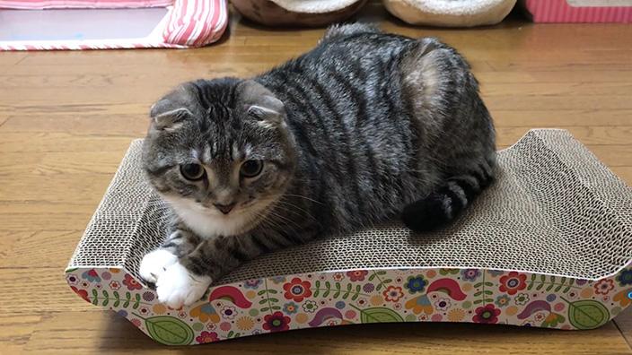 猫壱 バリバリ ベッド Lまとめ