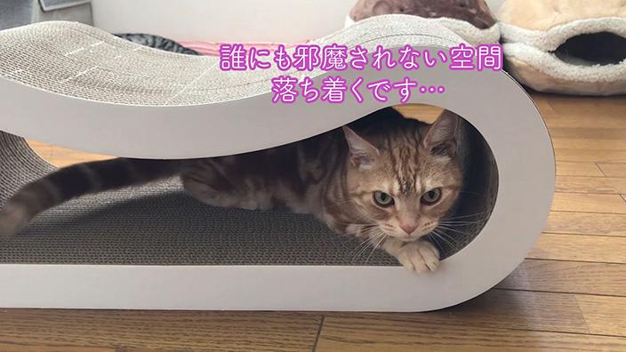 くらふと工房クレアル 猫の爪とぎ 穴あき枕|製品の魅力や特長とおすすめポイント