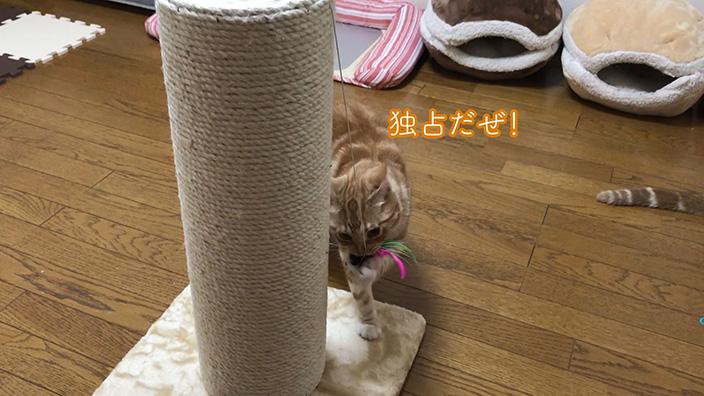 ottostyle.jp 猫用爪とぎポール(極太)まとめ