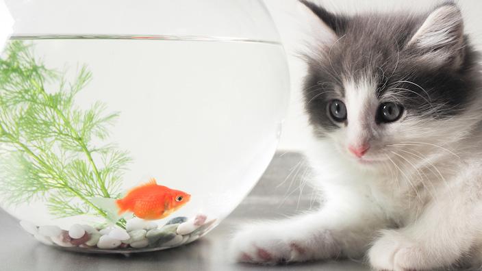 猫用自動給水機2種類のタイプとメリット・デメリット