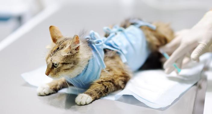 メス猫の避妊手術のしおり