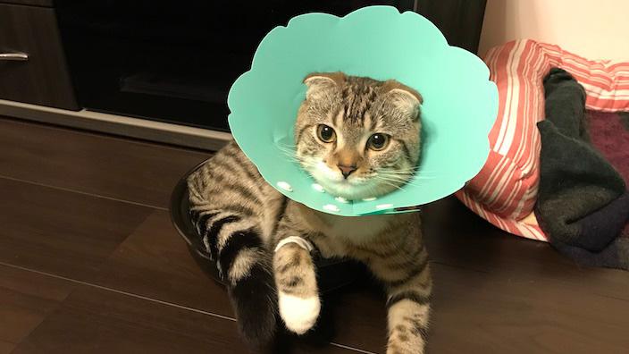 オス猫の去勢手術のまとめ