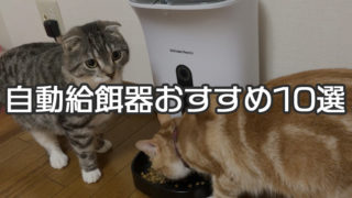 【最新版】自動給餌器おすすめ人気ランキング&選び方|カメラ付きやスマホで遠隔操作できるスマートペットフィーダーがトレンド!【猫用】